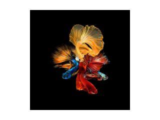Stikla Glezna 80x80